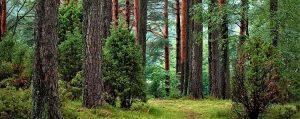 Интересные факты о лесе