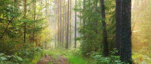 Леса — природное достояние Вологодской области